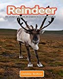 Reindeer: Fun Facts and Amazing Photos of Animals in Nature