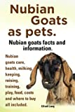 Nubian Goats as pets. Nubian goats facts and information. Nubian goats care, health, milking, keeping, raising, training, play, food, costs and where to buy all included.