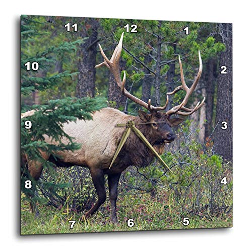 3dRose Danita Delimont - Elk - Rocky Mountain Bull Elk with Large Antlers - 15x15 Wall Clock (DPP_313981_3)