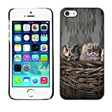 Be Good Phone Accessory // Hard Shell Protective Cover Case for Apple Iphone 5 / 5S // Owl Cat Nest Kitten Persian Kitten