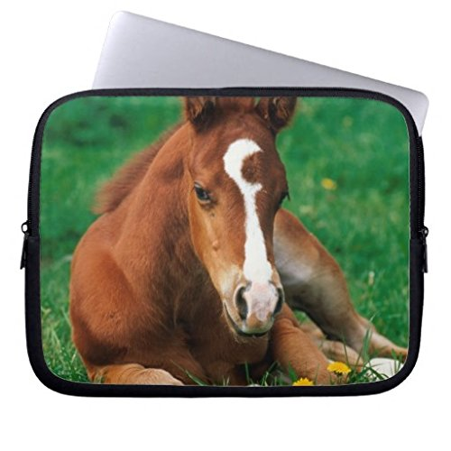 (Christmas Gift for Kids 11.6-12 Inch Laptop Case for Men Unique Quarterhorse Brown Foal is Lying in a Meadow Notebook Computer Case Bag Cover for Dell/ Hp/ Lenovo/ Sony/ Toshiba/ Ausa/ Acer/ Samsung )