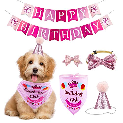 birthday dog hat small dog buyer's guide