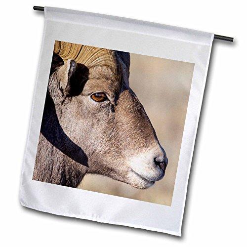 3dRose Danita Delimont - sheep - Wyoming, Teton County, National Elk Refuge, Bighorn sheep ram portrait - 18 x 27 inch Garden Flag (fl_260614_2) - National Elk Refuge