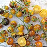30 INDIGO GOLD BERRIES TOMATO SEEDS 2018 (all non-gmo heirloom vegetable seeds!)