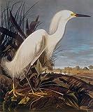 "Snowy Heron Or White Egret by John James Audubon - 25"" x 30"" Giclee Canvas Art Print"