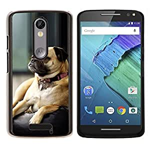 Caucho caso de Shell duro de la cubierta de accesorios de protección BY RAYDREAMMM - Motorola MOTO X3 3rd - Perro del barro amasado gruñón Small Brown dormir lindo