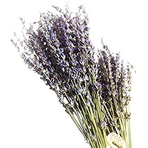 400stems Real Natural Dry Lavender bunch Dried Flower,Decorative Flowers Bouquet for Wedding Home Decorations Valentine's Day Gifts (400) 1