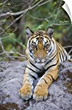 Canvas On Demand Wall Peel Wall Art Print entitled India, Bandhavgarh National Park, tiger cub lying on rock