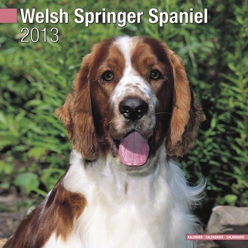 Spaniel 2013 Calendar - Welsh Springer Spaniel 2013 Wall Calendar #10119-13