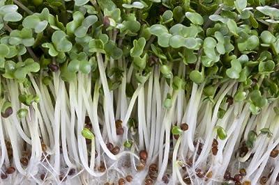 Broccoli, DiCicco Organic Sprouting Seeds 2 OZ