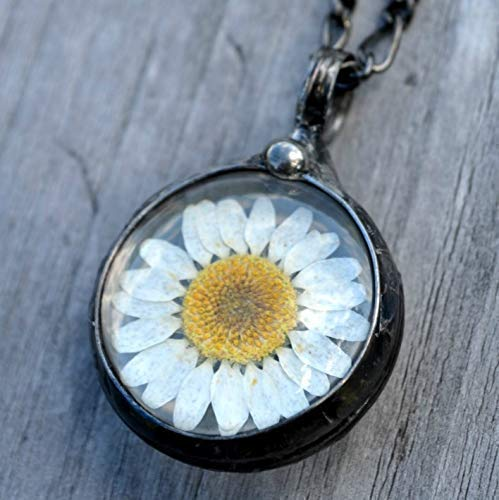 1 Daisy DRIED FLOWER PENDANT Faceted Glass White Daisies Wildflower Round Flat Encased Bronze Finish 52x40x13mm