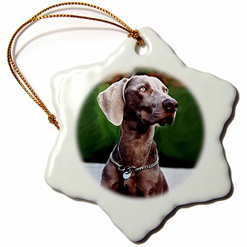 3dRose Weimaraner Snowflake Porcelain Ornament, 3-Inch