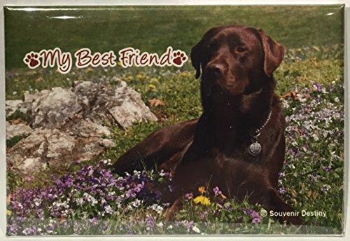 "Labrador Retriever Chocolate Dog Souvenir Magnet 2""x for sale  Delivered anywhere in USA"