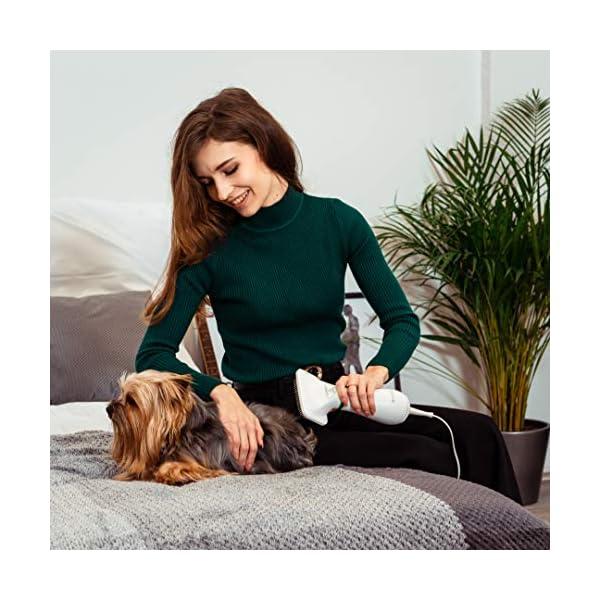 Secadores para cães domésticos