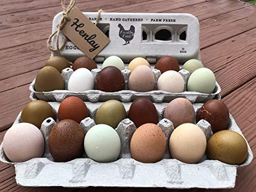 Egg Cartons- Printed Recycled Egg Carton, Bulk 250 Egg Cartons per Bundle, Attractive Farm Fresh Design w/FDA reqs, One Dozen Eggs, Recycled Paper Pulp Cardboard, Small Medium Large & XL Eggs by Henlay (Image #8)