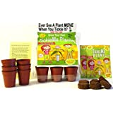 """TickleMe Plant Greenhouse garden kit with science activity card to"""" Grow the only House Plant that closes its leaves and lowers it branches when you Tickle It) Great Unique Gift Idea!"""