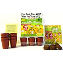 """TickleMe Plant Greenhouse garden kit with science activity card to ("""" Grow the only House Plant that closes its leaves and lowers it branches when you Tickle It! """") Great Unique Birthday Gift Idea!"""