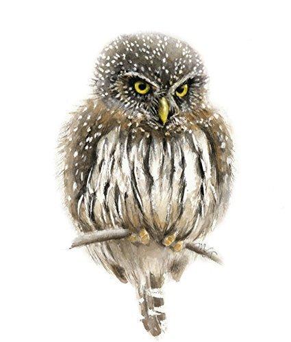 Pygmy Owl Watercolor Giclee Print