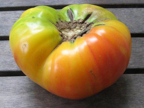 Hawaiian Pineapple Tomato 4 Plants - Bicolored Heirloom