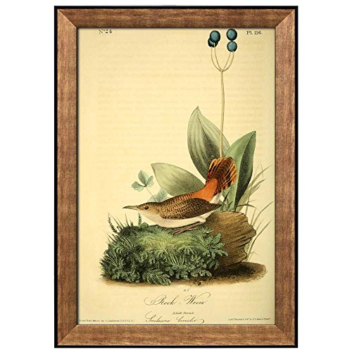 Beautiful Illustration Inside of an Elegant Frame of a Rock Wren by John James Audubon Framed Art
