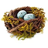 Blue Robins' Eggs in Nest Decoration Decorative Accessories Animals & Nature