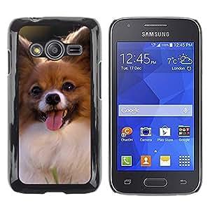 TopCaseStore / la caja del caucho duro de la cubierta de protección de la piel - Papillon Chihuahua Dog Small Canine - Samsung Galaxy Ace 4 G313 SM-G313F