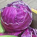 "200 Fresh Seeds, Cabbage ""Red Acre"" (Brassica oleracea) Seeds By Seed Needs"