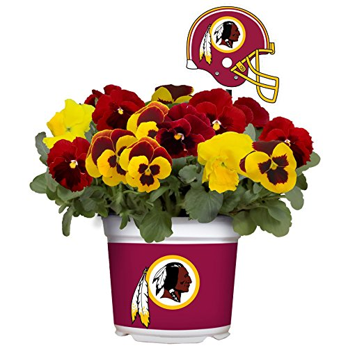 Sporticulture Washington Redskins-Fall Pansy Mix, 3 Quart, Team Colors