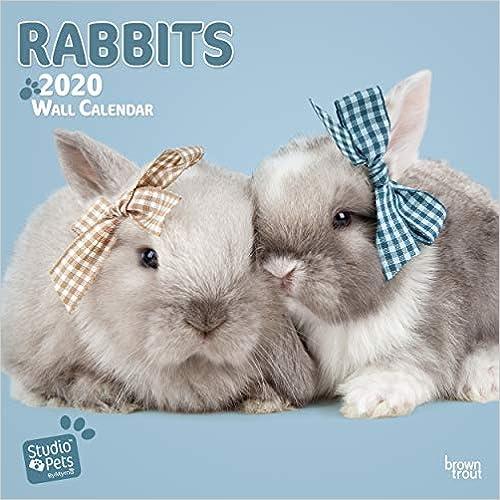 Rabbits 2020 Square