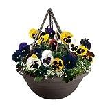 Bloem 17in Milano Hanging Basket Peppercorn MBHB15176044; 12 pack