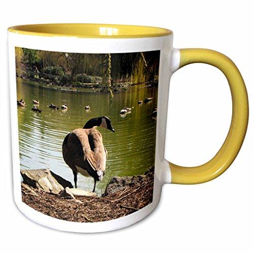 3dRose Krista Funk Creations Migratory Birds - Canada Goose Watching Ducks Swim - 11oz Two-Tone Yellow Mug - Outlet Swim Canada