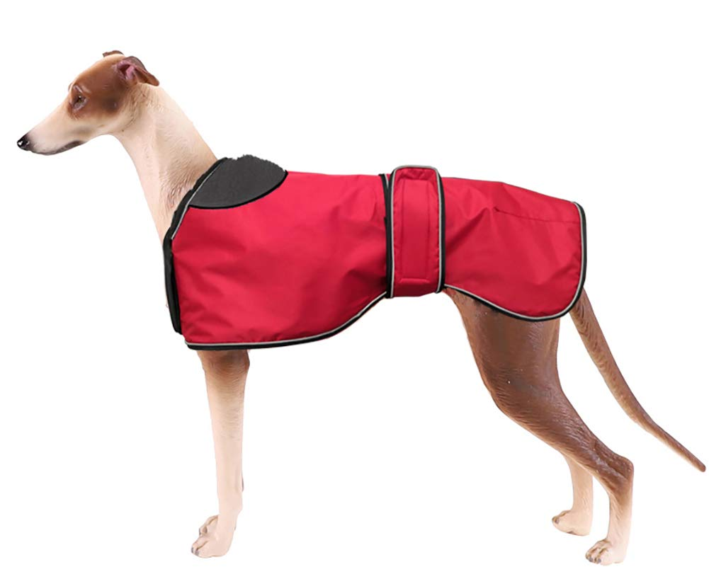 Whippet wearing a red waterproof winter dog coat