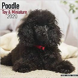 Best Dog Toys 2020 Poodle (Toy & Miniature) Calendar   Dog Breed Calendars   2019