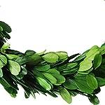 D.Jacware Preserved Boxwood Wreath Indoor Wreath Round Preserved Garden Boxwood Wreath 10 inch