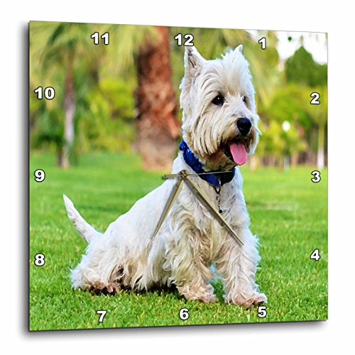 3dRose Print of West Highland Terrier Painting - Wall Clock, 10 by 10-Inch (dpp_203765_1)
