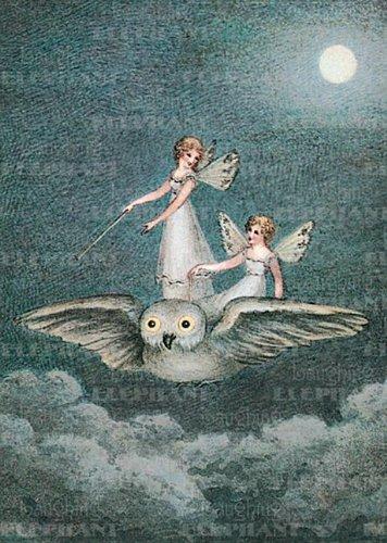Fairies Riding Owl - Birthday Greeting Card
