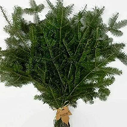 Amazon Com Tin Roof Treasure Balsam Fir Boughs Tips 1 2 Ft Pack Of 15 Arts Crafts Sewing