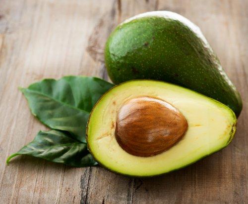 organic-heirloom-2-avocado-seeds-dark-green-edible-fruit-tree-bulk-seeds-fresh-t028