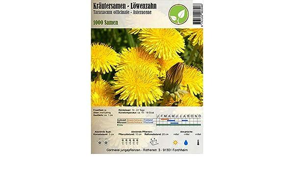 Semillas de hierbas - Diente de león / Taraxacum officinale - Asteraceae 1000 semillas: Amazon.es: Jardín