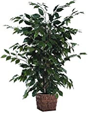 Vickerman Everyday 4' Artificial Ficus Bush Potted in a Square Willow Basket - Lifelike Home Office Decor - Faux Indoor Potted Bush