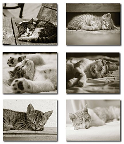 Sleeping Kitten Greeting Cards - Blank on the Inside - Includes Cards and Envelopes - 6 Unique Designs - 5.5