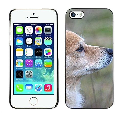 Premio Sottile Slim Cassa Custodia Case Cover Shell // F00016731 chien Rusty // Apple iPhone 5 5S 5G