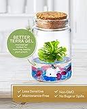 Bloomify Sundew Terrarium - 100% Self Sustaining