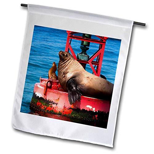 3dRose Danita Delimont - Sea Lions - Steller sea Lion on Harbor Buoy, Ventura, California, USA - 18 x 27 inch Garden Flag (fl_314703_2)