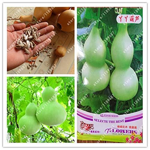 (Seed Original Package-True Bottle Gourd Plants Big Wine Gourd Spoon Calabash Gourd Vegetable)