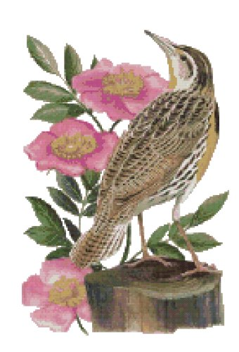 North Dakota State Bird (Western Meadowlark) and Flower (Wild Prairie Rose) Counted Cross Stitch Pattern
