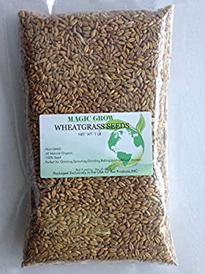Certified Organic Wheatgrass Seed 1lb. Non-GMO - Guaranteed to Grow
