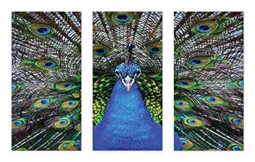 Lunarable Peacock Wall Art 3 Piece Set, Magnificent Peacock Portrait with Vibrant Colorful Feathers Photo Pattern, Gloss Aluminium Modern Metal Artwork Panel Set for Wall Decor, Blue Green Brown