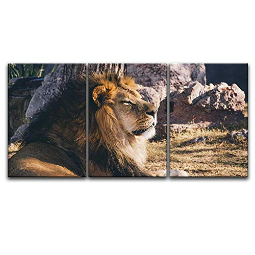 3 Panel A Lion Lying in The Wild x 3 Panels