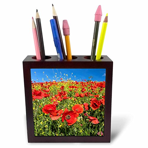 3dRose Danita Delimont - Flowers - Spain, Andalusia. A field of bright and cheerful red poppy wildflowers - 5 inch tile pen holder (ph_277891_1) by 3dRose